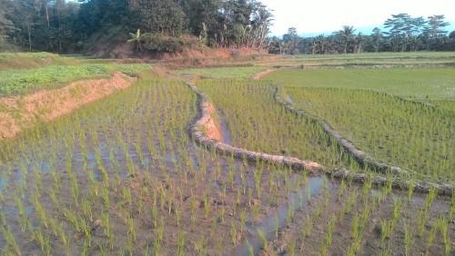 peningkatan luas lahan tanam