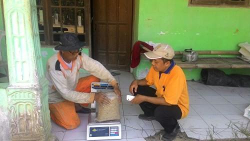 Pengemasan beras hasil petani cariu